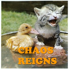 duckling and kitten reign