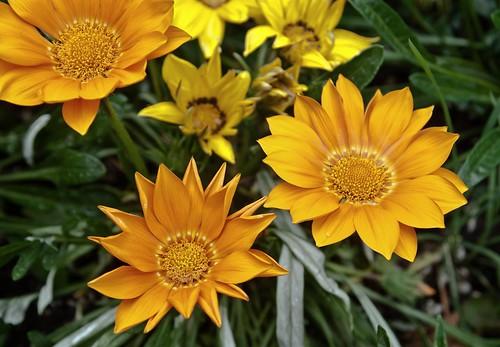 World Center Flower Series 1 of 4