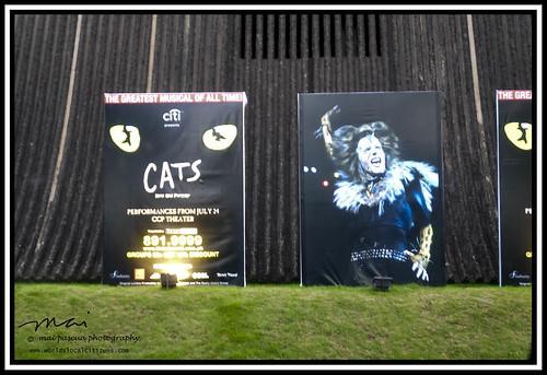 CATS065 copy