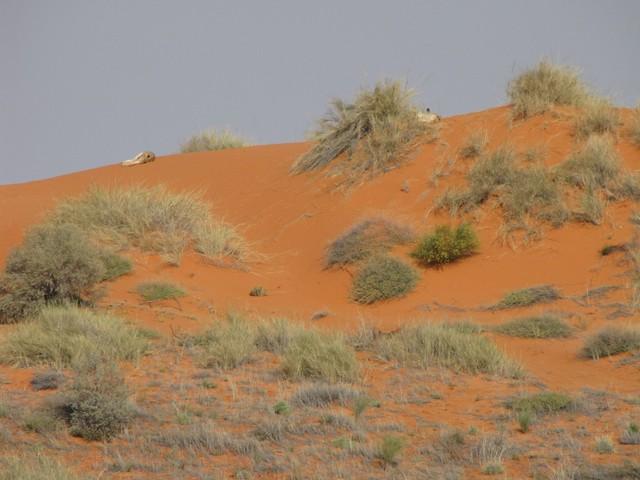 Kalahari: Colours