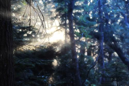 forestlight