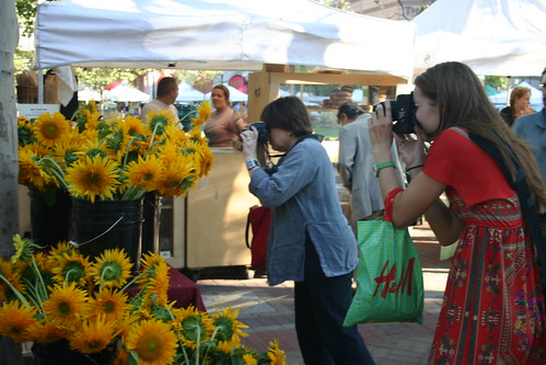 Photographing sunflowers