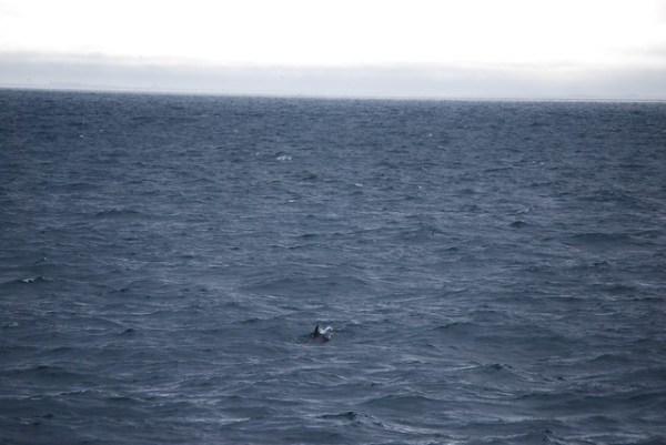 ¿Avistamiento de Ballenas?