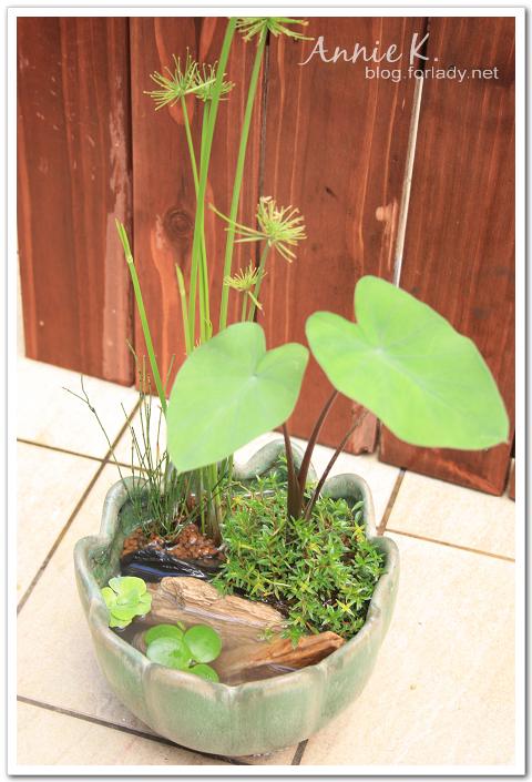 水生植物5