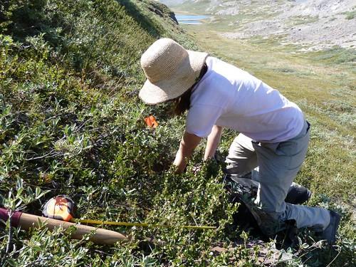 digging a pit to set up long term temp loggers