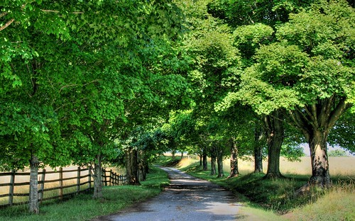 On a Tree lined Country Lane