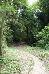 氷取沢市民の森(Hitorizawa Community Woods)