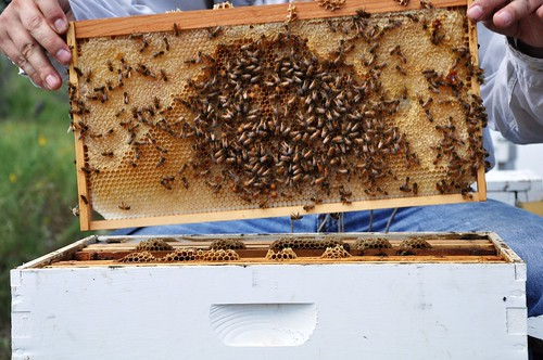 Opening a hive