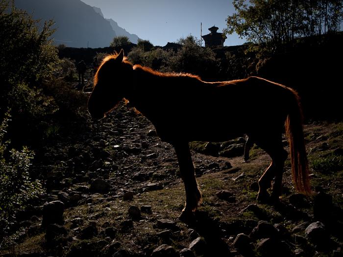last_nepal-11