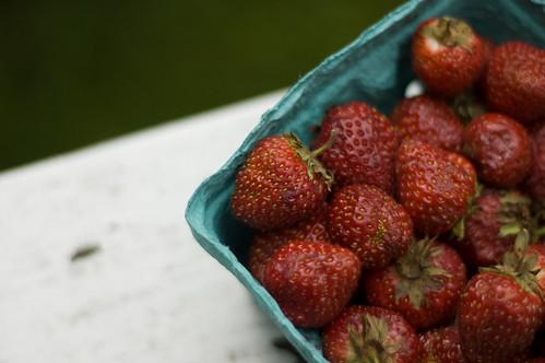 berries! (by bookgrl)
