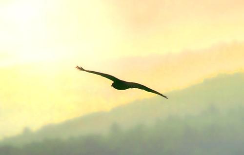 The Hawk Flies…