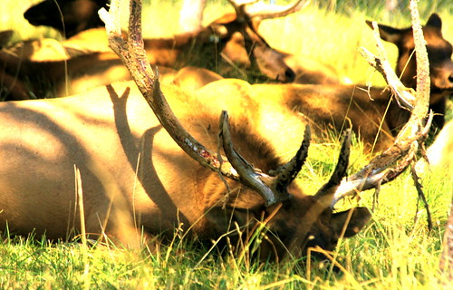 Winston Wildlife Safari
