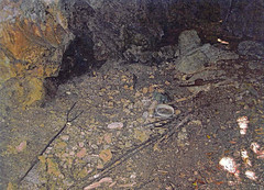 Remnants Found in Rock Shelter