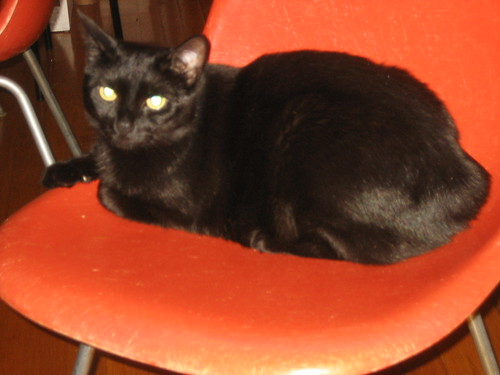 Jezebel on orange chair