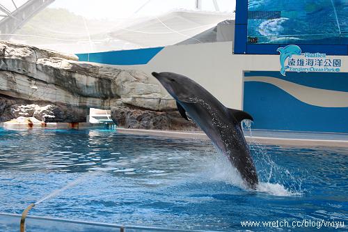 [旅遊.花蓮]花蓮海洋公園.下集~騎海豚.看尼莫 @VIVIYU小世界