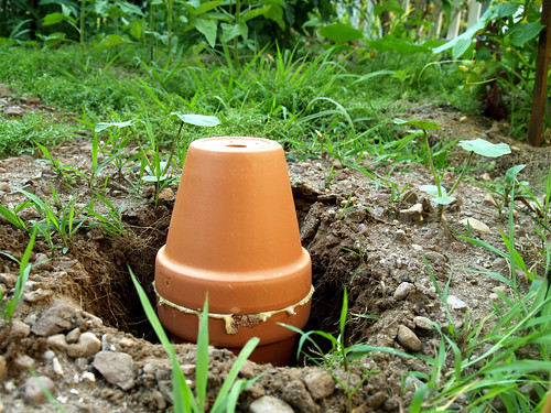 dig hole, insert olla