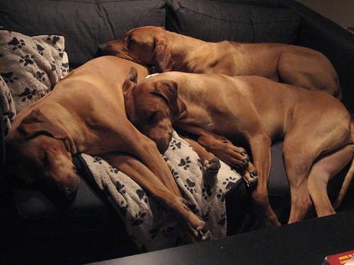 3 80lb Dogs, 1 Love Seat.