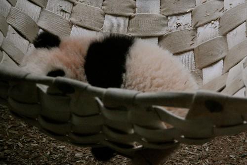 Sleepy Panda Baby