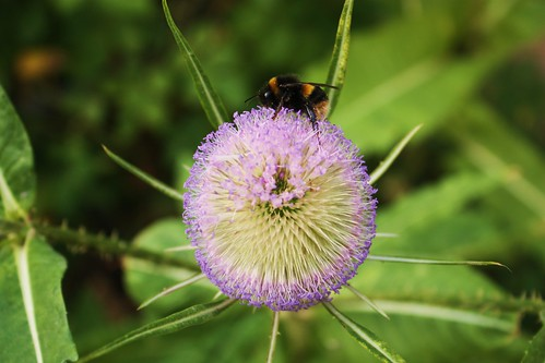 Bee in Phoenix Garden