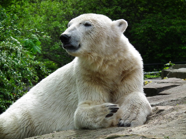 32863 Knut kann eigentlich nichts