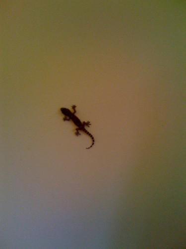 215/365 lizard