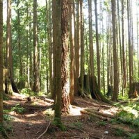 Greater Vancouver Hike - Cedar Mills & Headwaters Trail Loop