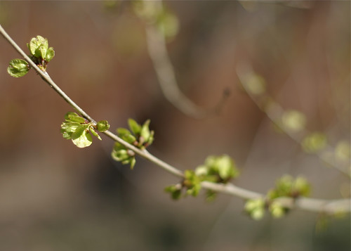 Sign of Spring 3