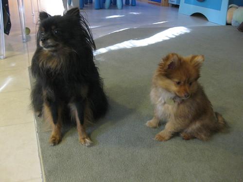 Kichou & Georgie