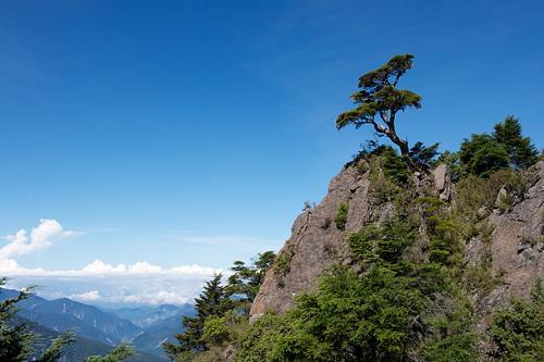 Lonely Alpine Tree