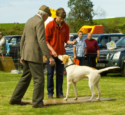 Ennerdale Show 2010- judging the hounds