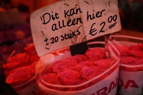 Pink Roses, Orange Tent