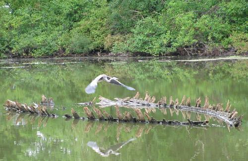 Heron flies over schooner hull