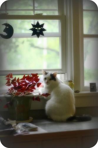 Window Lounging