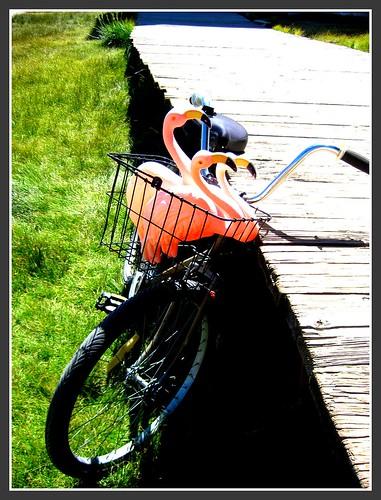 bodie bike