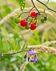 Berries and flowers