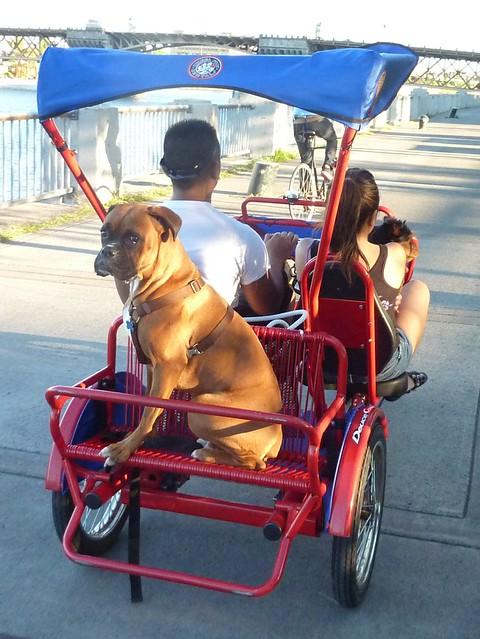 Dog Day Bike Ride