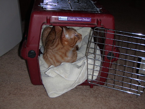 Crate-Trained Cat