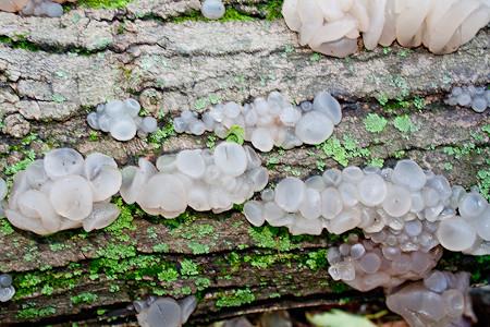 Strange Fungus