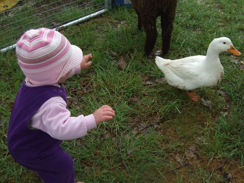 alice and duck
