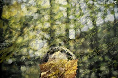 Leaf Blown