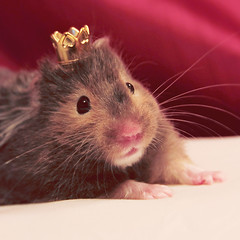 Princess Sophia