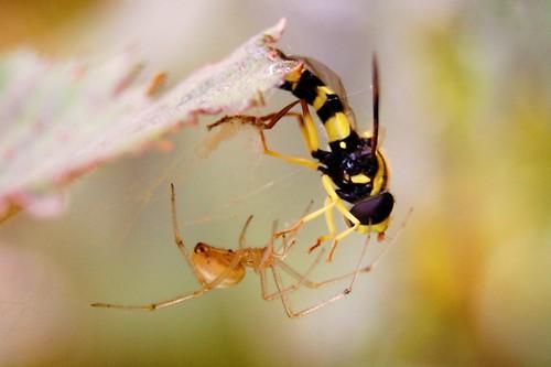 de doodsstrijd van een wesp