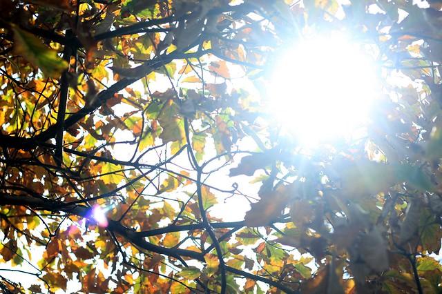 winnemac sunlight