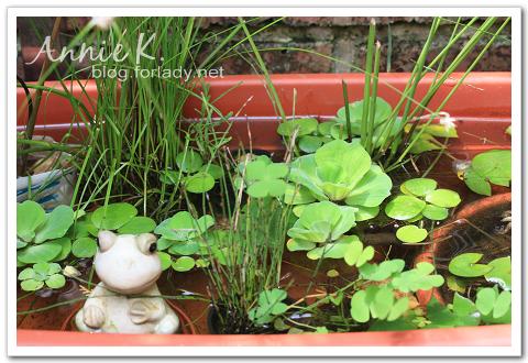 水生植物2