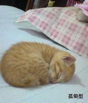 貓的睡姿 @ 新聞吐槽課 :: 痞客邦