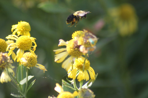 Kayaking - Pasquotank River - Bumblebee (By Ryan Somma)