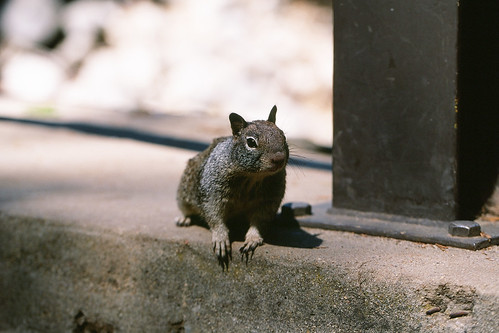 Squirrel at 100mm