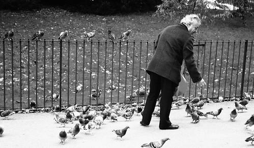 Feeding the Birds 3