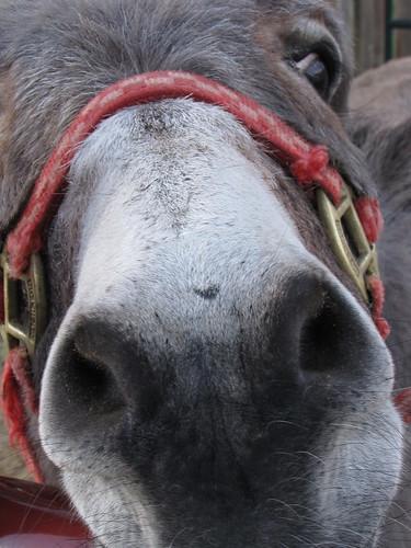 292/365 Donkey Nose