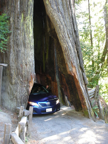 Drivethru Tree in the Avenue of the Giants